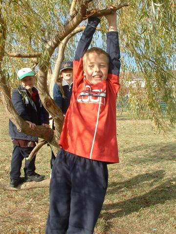 A child climbing a tree