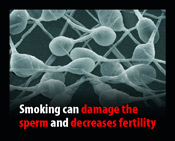 Smoking can damage the sperm and decreases fertility
